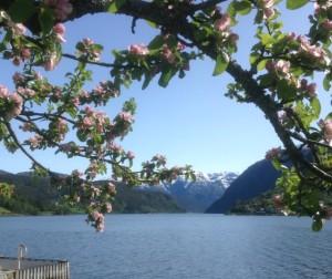Hardangerfjord bei Ulvik