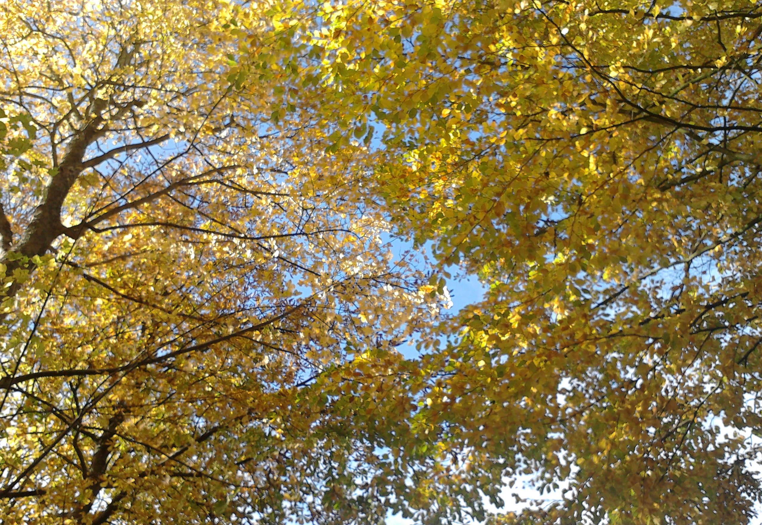 Sonntagsmomente Ein Herbstblatt Gedicht Zum Advent